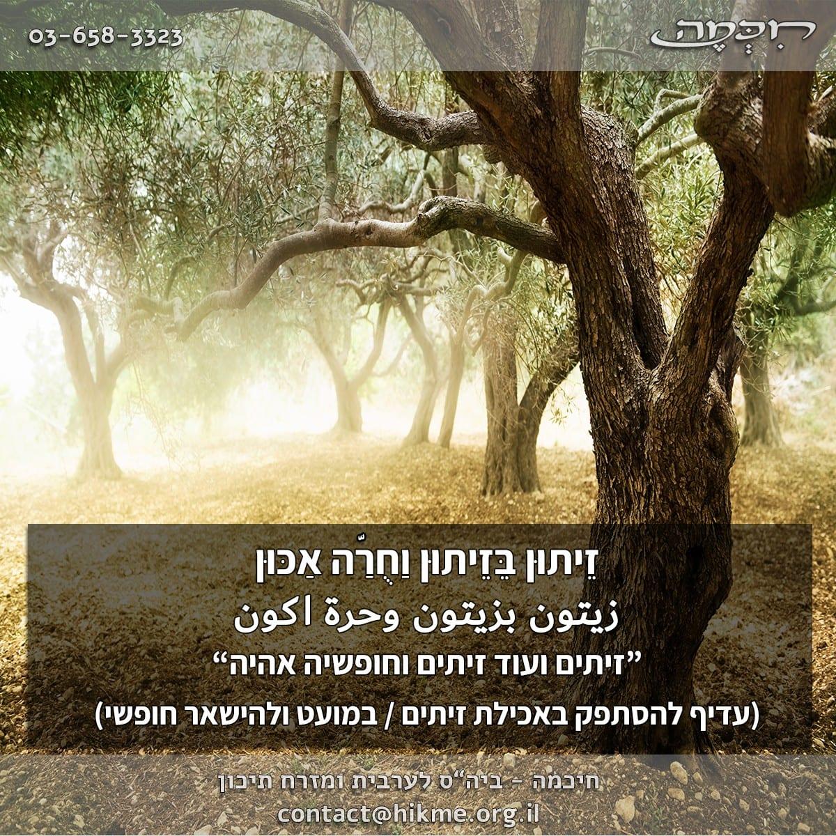 פתגמים בערבית על ההסתפקות במועט